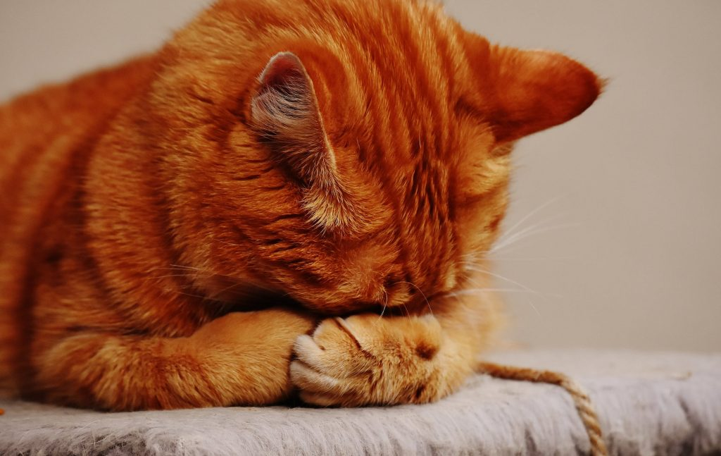 3 cosas que aprendes cuando adoptas un gato