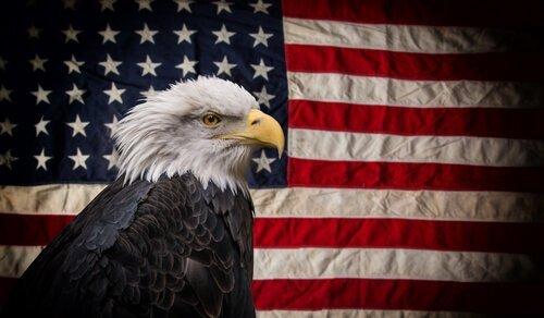 5 animales viviendo en Alaska. Cabeza de águila-bandera blanca americana