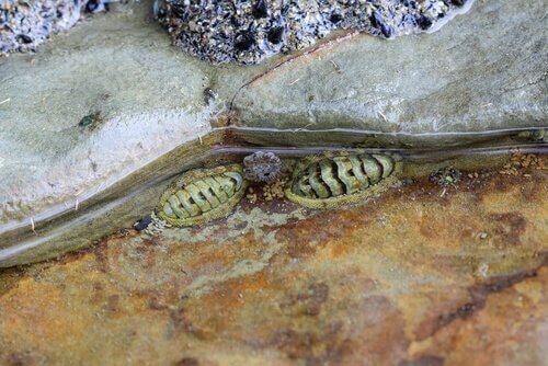 animales de playa otro de los animales de playa
