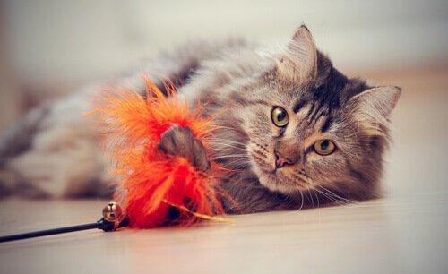4 trucos para enseñar a tu gato a jugar juntos