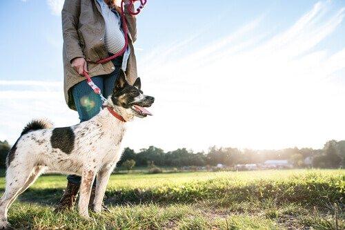 10 razones por las que amo tanto a mi perro. Amo tanto a mi perro porque siempre salimos juntos