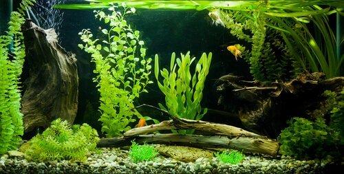Filtros de acuario. Acuario tropical con peces y plantas