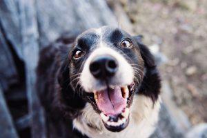 5 consejos para cuidar a un perro sordo