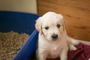 3 consejos para que su perro sepa donde hacer su negocio