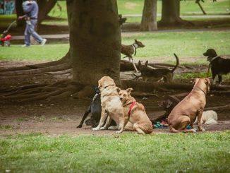 cani in strada