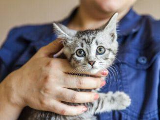 10 demostraciones de amor de gatos