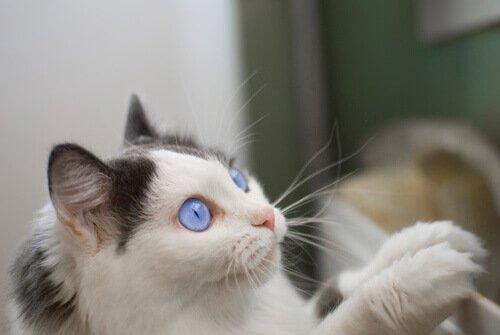 14 nombres creativos para gatos