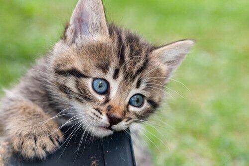 14 nombres creativos para tu nuevo gato