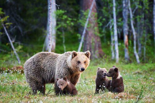 5 animales viviendo en Alaska