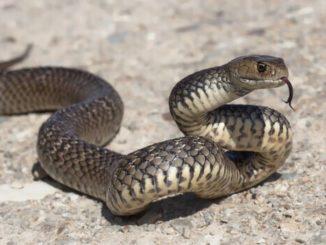 serpente 2
