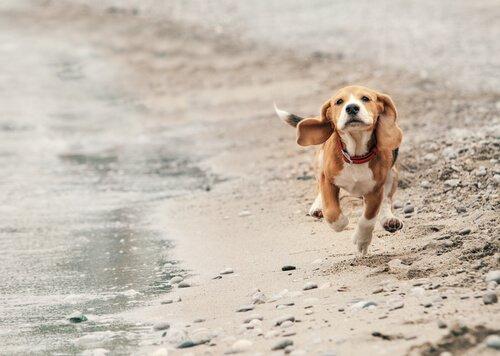 paseo de su perro