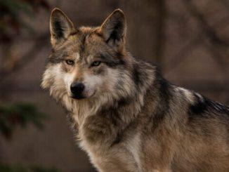 11 animales en peligro de extincion
