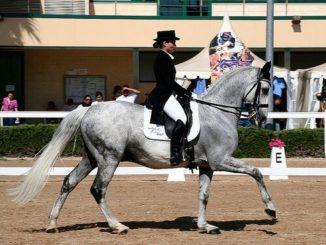 una competizione di dressage con fantina e cavallo grigio