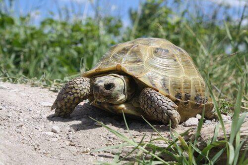 una tartaruga cammina sulla sabbia
